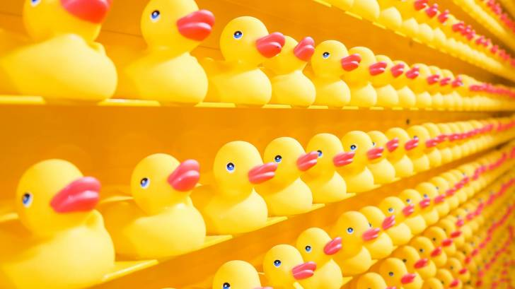 rows of plastic ducks, fake